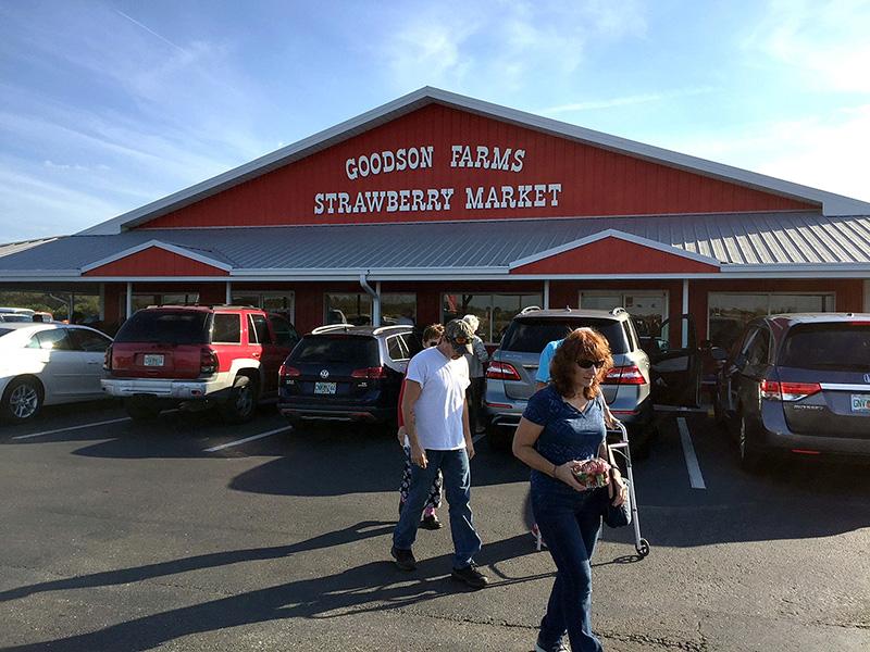 The+Strawberry+Craze+at+Goodson+Farms