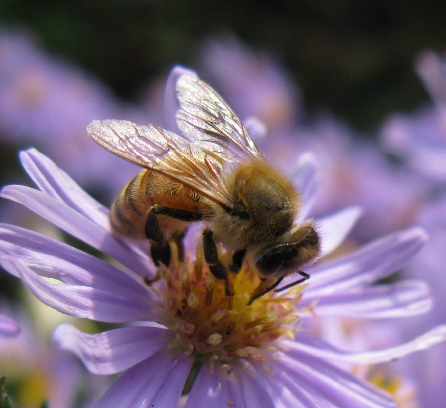The+Bee+Population+is+Still+Dwindling