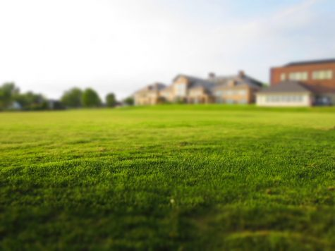 Grass lawns are actually Terrible :An intense critique of grass lawns