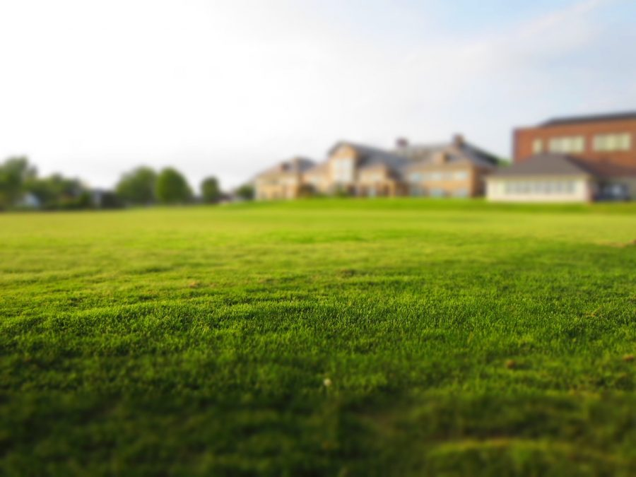 Grass lawns are actually terrible; an intense critique of grass and its maintenance
